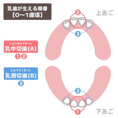 乳歯が生える順番【0~1歳頃】